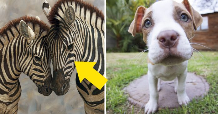 20 curiosos datos sobre animales que casi nadie sabe y nos entristecen banner
