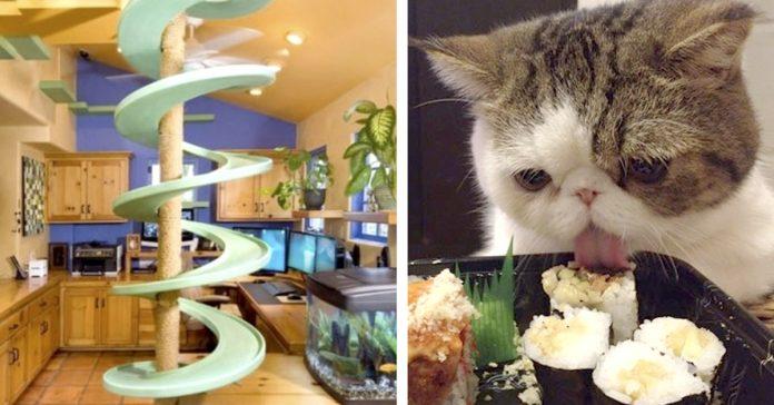 20 gatos que probablemente viven mejor que tu banner