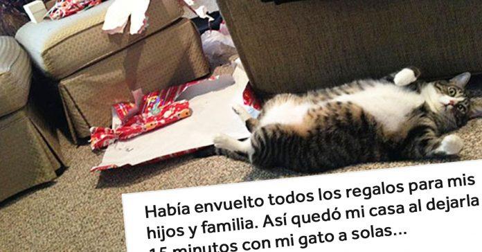20 perros y gatos que han acabado con estas navidades banner