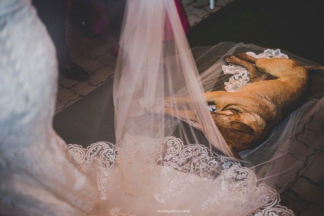 Un perro callejero interrumpe la boda de una pareja justo antes de darse el sí quiero