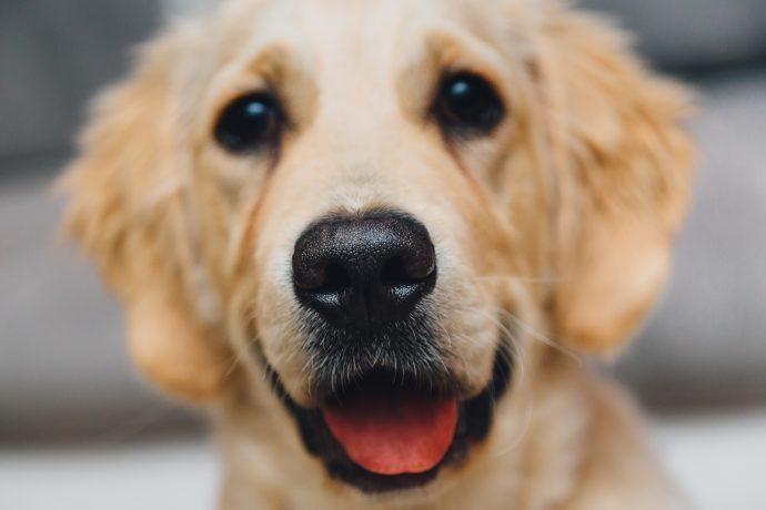 descubre la razon por la que no deberias besar a tus mascotas 1516267152