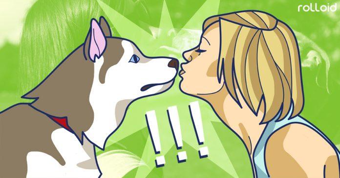 descubre la razon por la que no deberias besar a tus mascotas banner