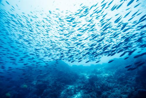 pescado capturado en la naturaleza o cultivado cual deberia serle a su familia 204291