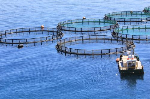 pescado capturado en la naturaleza o cultivado cual deberia serle a su familia 204296