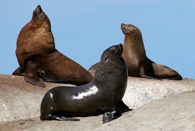 Las 8 Famosas islas mundialmente conocidas por su inmensa plaga de animales que abarrotan sus calles