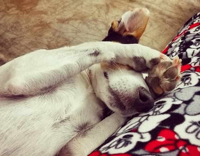 """12 Divertidas imágenes de perros """"pasotas"""" que demuestran que pueden dormir donde les de la gana"""