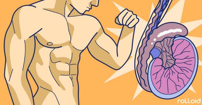 como aumentar la testosterona para ganar masa muscular banner