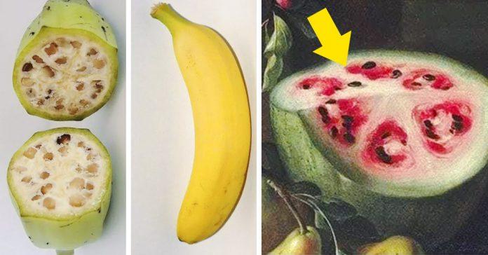 como son frutas salvajes banner