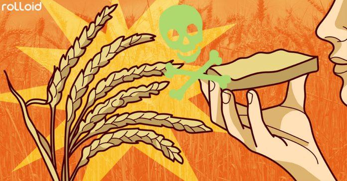 este estudio confirma que el trigo podria llegar a ser toxico salud banner