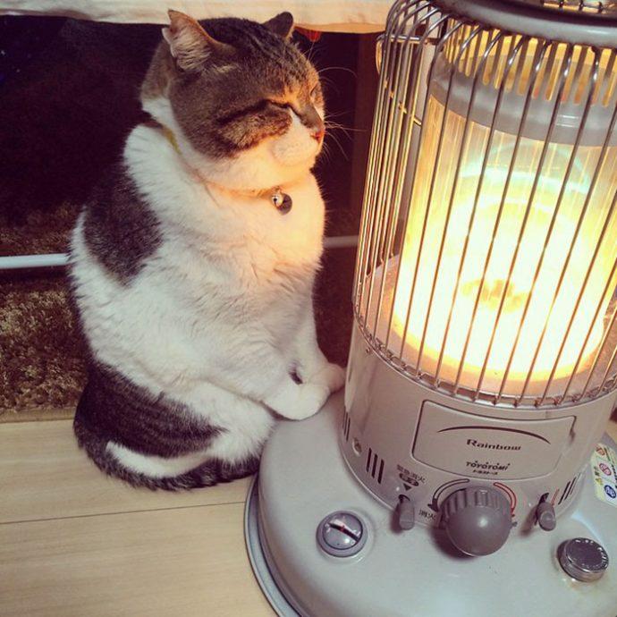 9 Divertidas Imágenes de Busao, el gato que ha descubierto cómo funciona una estufa para el duro invierno