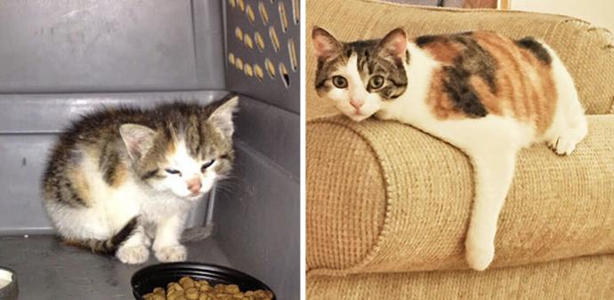 17 Rompedoras imágenes que muestran el antes y el después de la transformación de gatitos rescatados
