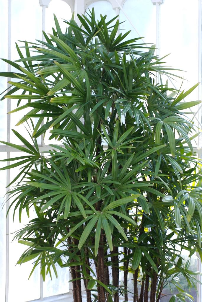 Las 15 Plantas que deberíamos tener en casa para mejorar nuestra vida según el lugar en el que la coloquemos