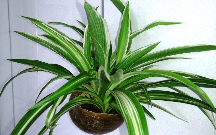 las 15 mejores plantas que puedes tener en tu casa 1517830822