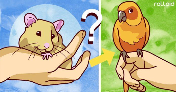las mejores mascotas que puedes elegir si tienes un piso pequeno banner