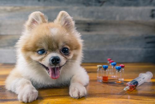 se resfrian los perros como los humanos es contagioso perro medicinas