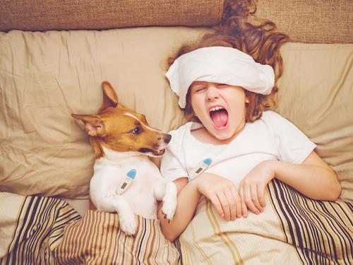 se resfrian los perros como los humanos es contagioso perro y ninxxo resfriado