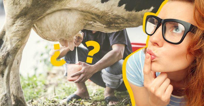 10 investigaciones cientificas ridiculas pero sorprendentemente fascinantes banner