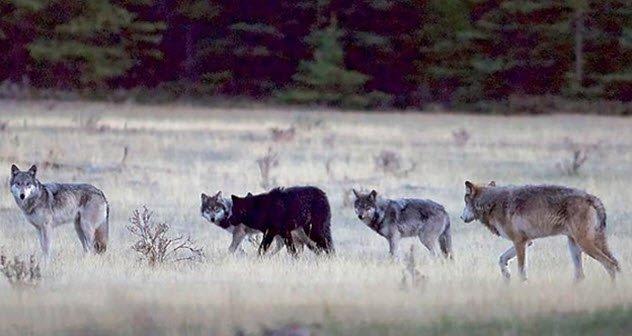 8 Extraños lugares en el mundo donde los animales salvajes viven al lado de los humanos