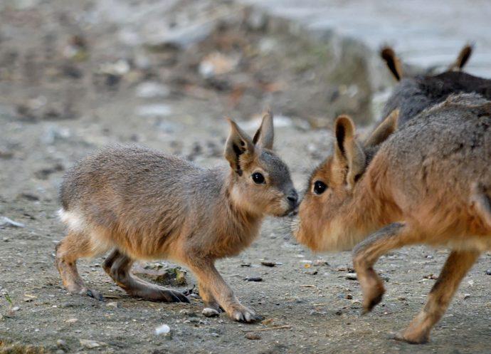15 Extraños animales del mundo real que seguramente no sabías que existían y que parecen de ciencia ficción
