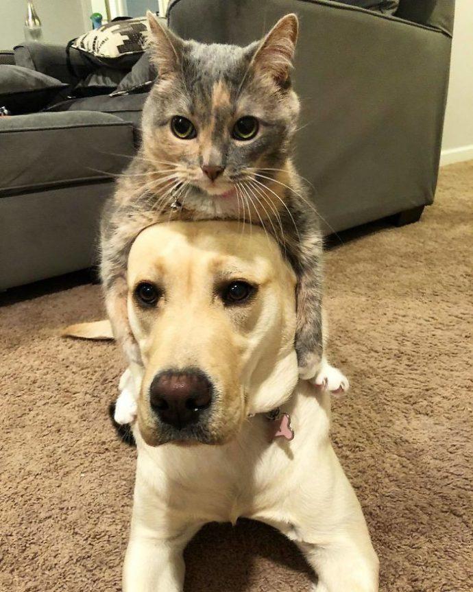 20 Imágenes que demuestran que los Golden y los Labradores son los mejores amigos del mundo