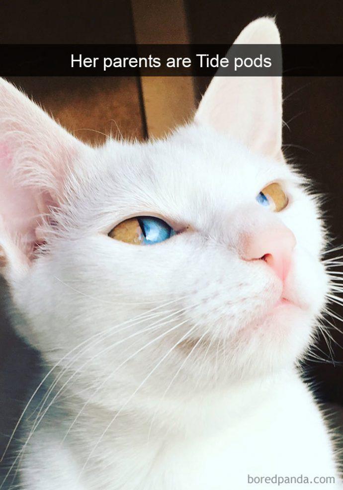 20 Divertidas imágenes de gatos en Internet que demuestran que son los grandes enemigos del hombre