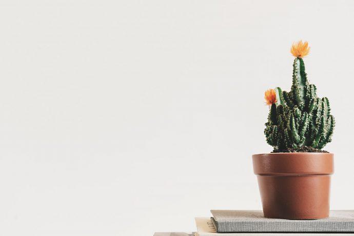 Los 5 Beneficios y pasos que deberíamos seguir para deshacernos de todo lo que no nos hace falta
