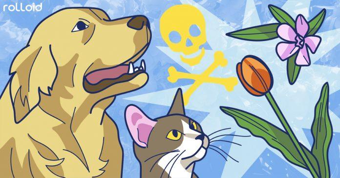 8 plantas venenosas que deberiamos evitar banner
