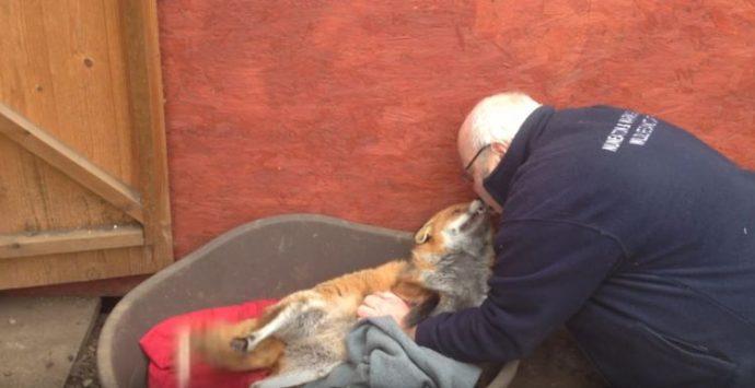 """El error que cometieron unas personas al rescatar un """"cachorro"""" moribundo y pensar que era un simple perro"""