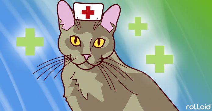 coomo pueden los gatos mejorar tu salud y vida banner