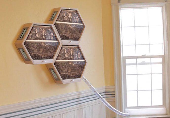 Una empresa está triunfando en todo el mundo con su novedoso sistema para tener abejas en el salón de casa