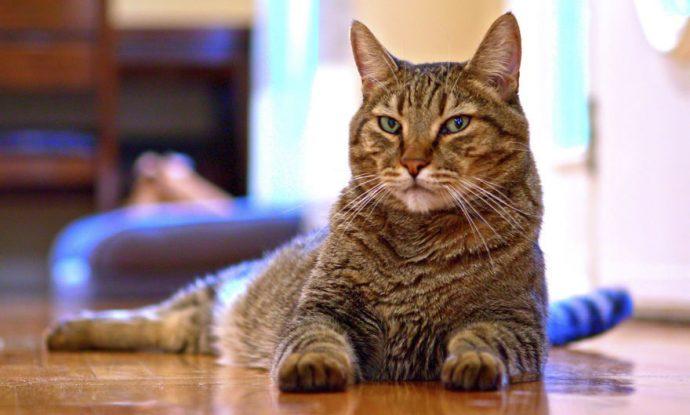 Un hombre graba en vídeo la actuación de su gato al fingir su propia muerte para ver si de verdad le quería