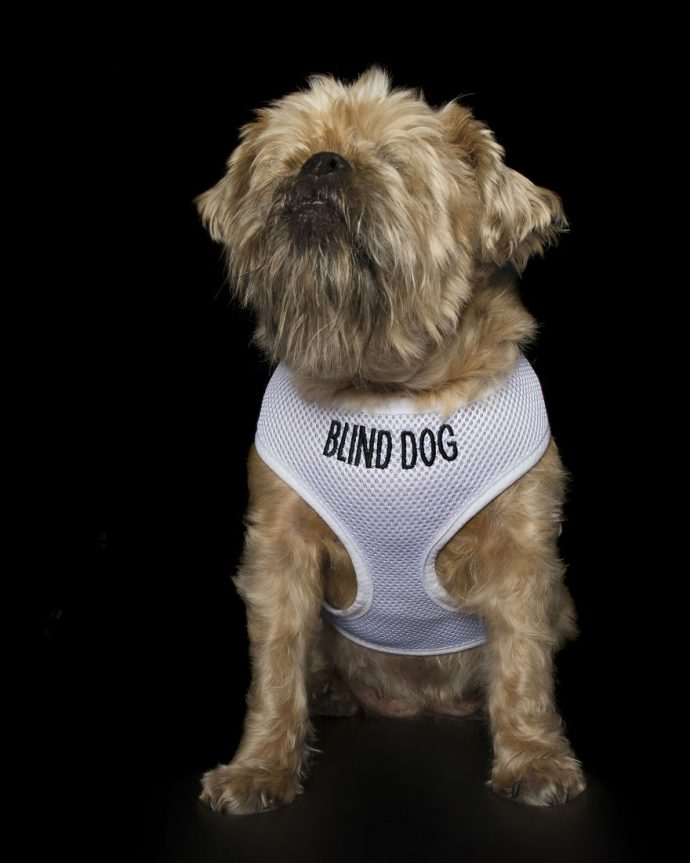 12 Imágenes de perros perfectamente imperfectos que un fotógrafo ha sacado para concienciar a los humanos