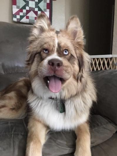 20 Divertidas imágenes de perros que muestran la transformación de sus caras cuando se comieron una abeja