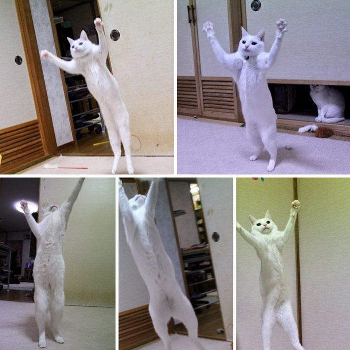 20 Divertidas y extrañas imágenes de gatos estirándose que están provocando el cachondeo en las redes