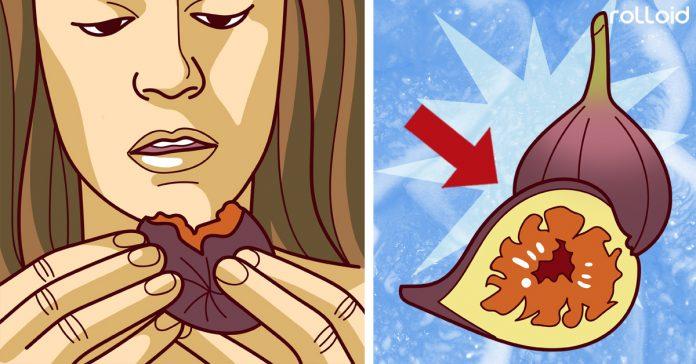 los higos no son una fruta son una flor y ademas tienen insectos banner