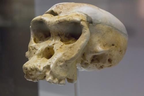 Una nueva especie: un estudio pone en duda que nuestros antepasados fuesen los neandertales