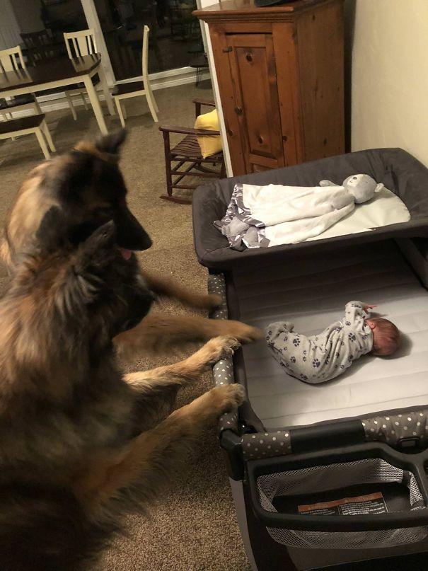 20 Imágenes que demuestran que los niños deberían criarse con un perro en casa