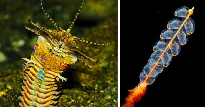 10 criaturas de las profundidades que no creeras que puedan existir banner