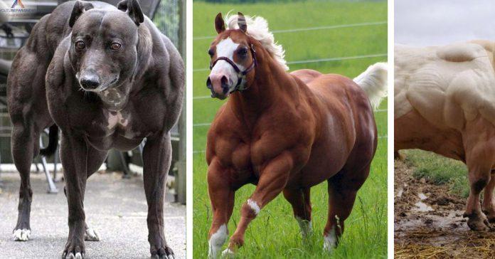 12 animales que parecen haber levantado mas peso del que debian banner