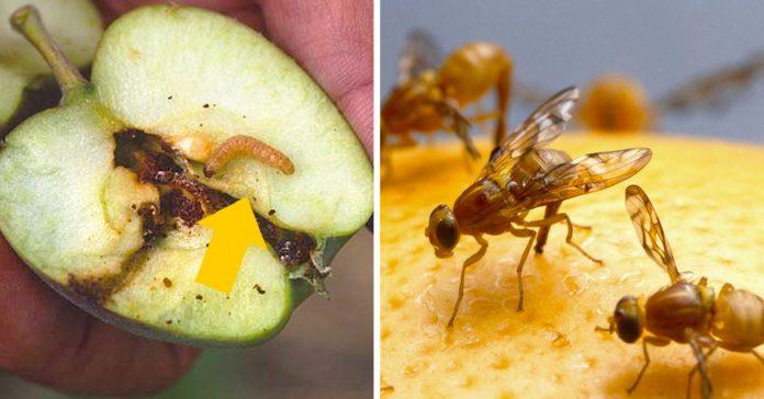 9 insectos que te seguramente te hayas comido sin saberlo banner