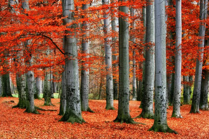 arboles otono bosque