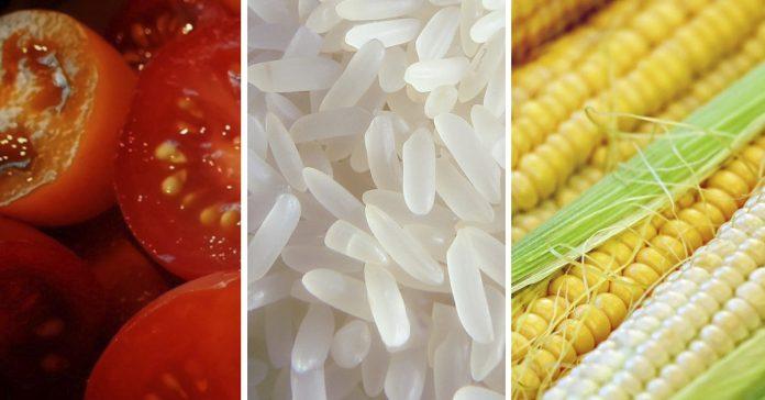 cuales son los alimentos mas consumidos en el mundo banner