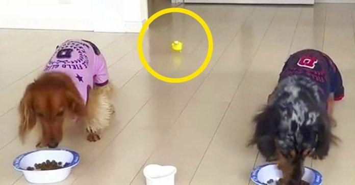 dos perros se disponian a comer de su plato hasta que aparecio un pajaro banner