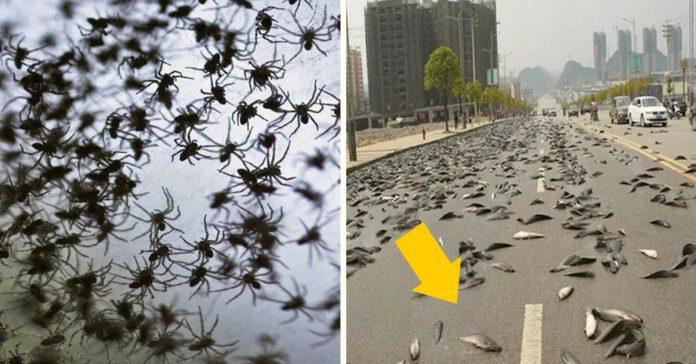 es cierto que en algunas ciudades del mundo han llovido animales banner