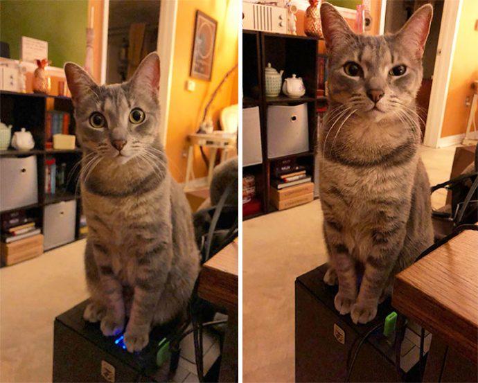 20 Imágenes de gatos traviesos que intentaron salirse con la suya con la cara que pusieron