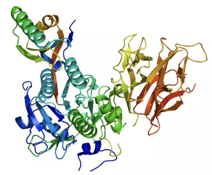 10 Mutaciones genéticas poco conocidas que sólo algunas personas pueden tener