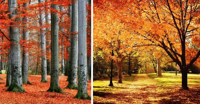 por que las hojas de los arboles cambian de color banner
