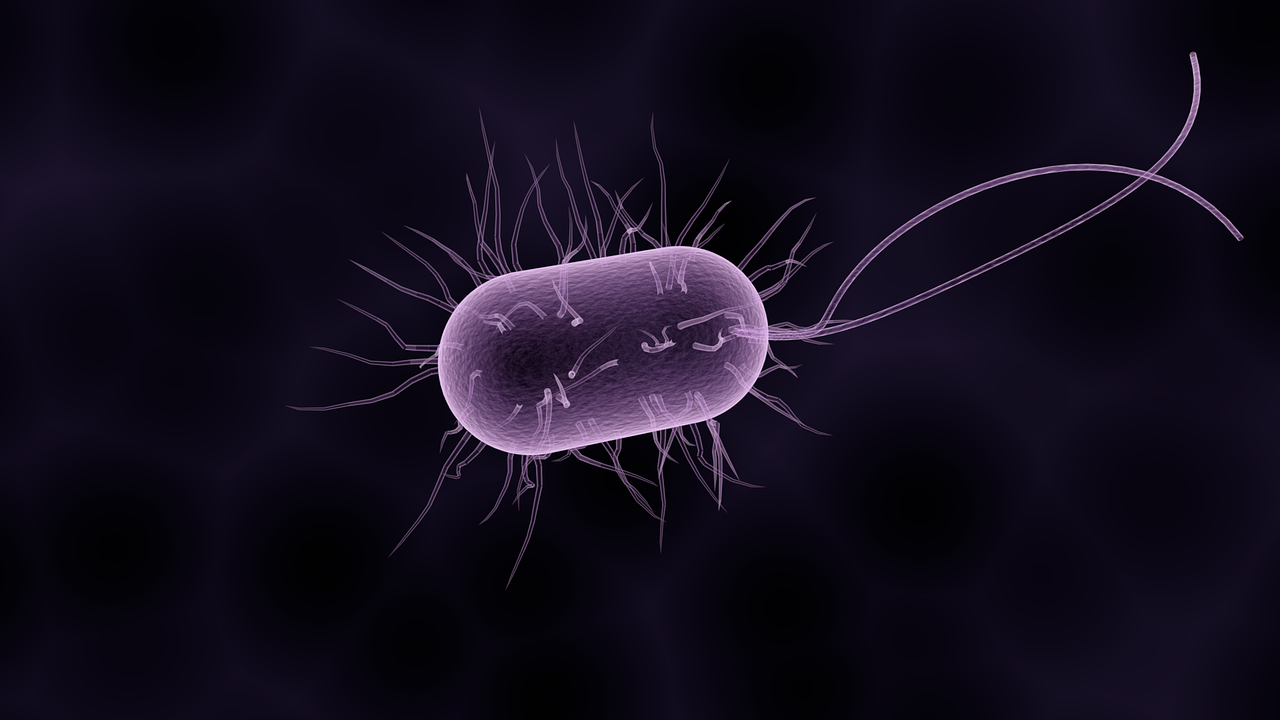 bacteria 1832824 1280