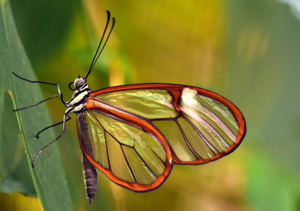 butterfly 3181831 960 720