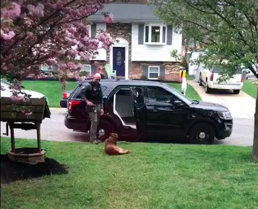 Graban en vídeo el truco que usó un soldado con su perro oficial tras negarse a meterse en el coche